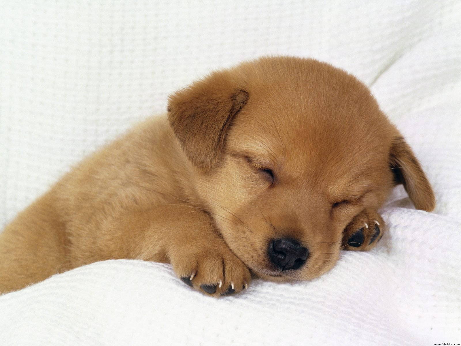 photo of an adorable sleeping puppy
